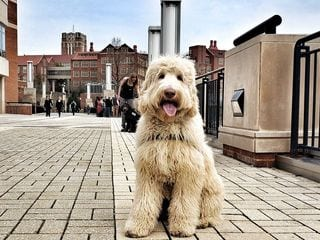 dog sitting at the street